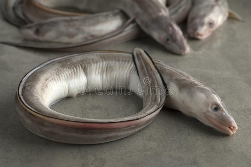 conger eel on fish counter