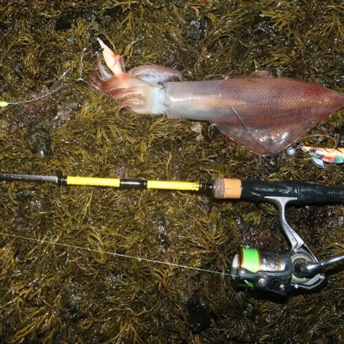 squid caught rod and line