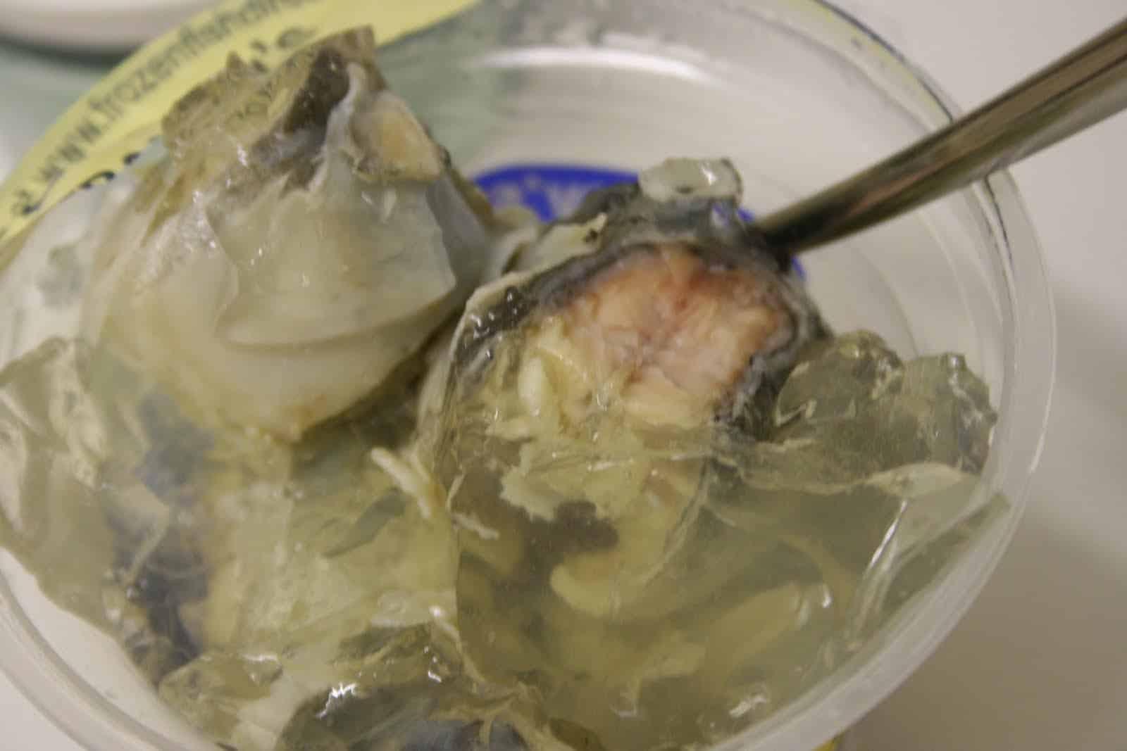 jellied conger eel